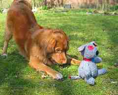 picture of dog and soft toy